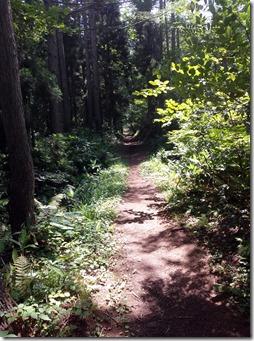 針葉樹の一本道