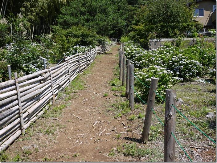 飯能桜の森 入口付近の道