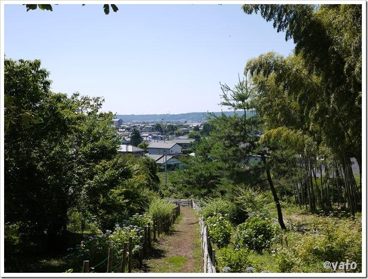 飯能桜の森 第二天覧山