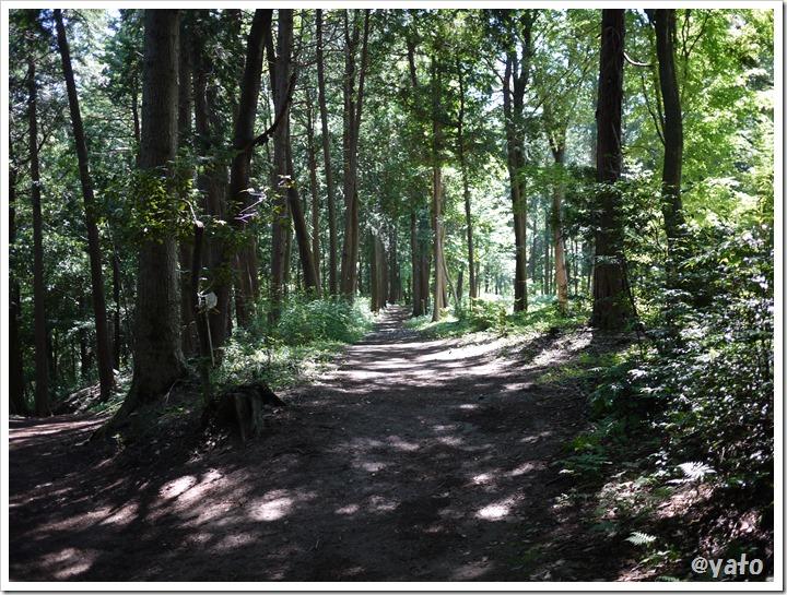 飯能桜の森 木々の間の一本道