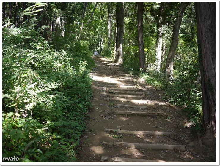 奥武蔵自然歩道 階段