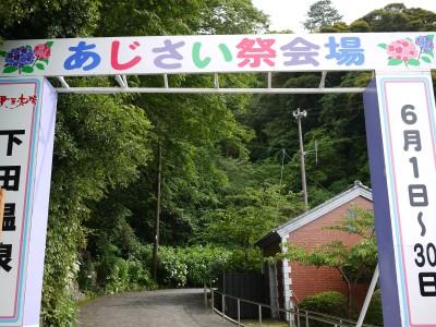 下田公園のあじさい祭り