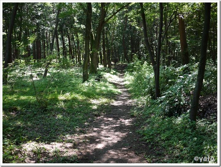 飯能桜の森 森の道