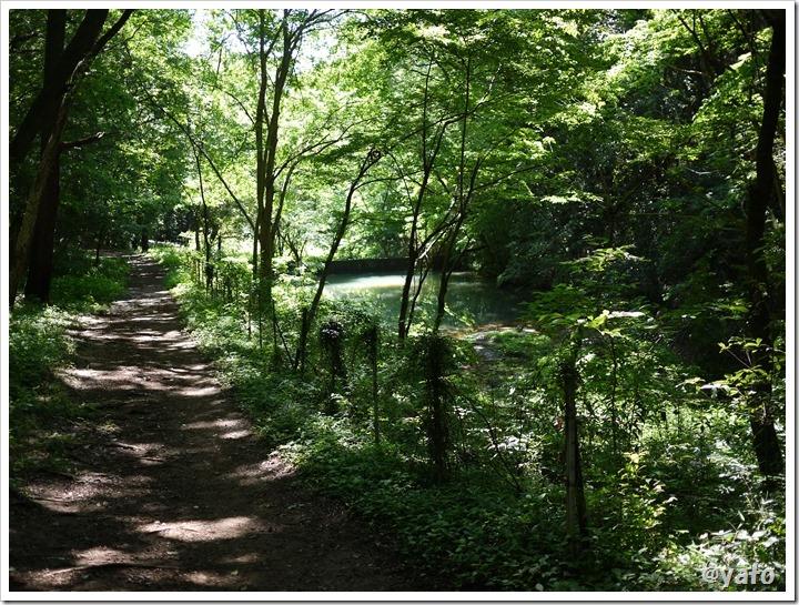 飯能桜の森 池