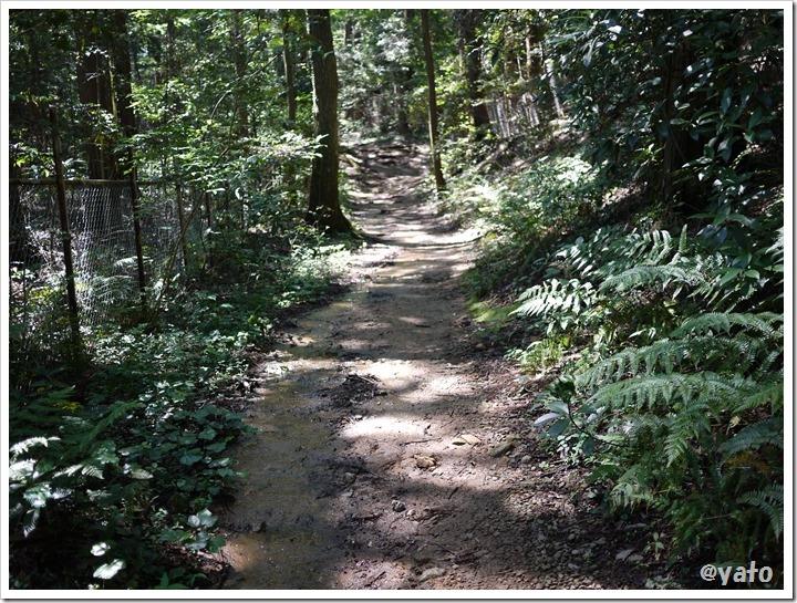 飯能桜の森 泥濘道