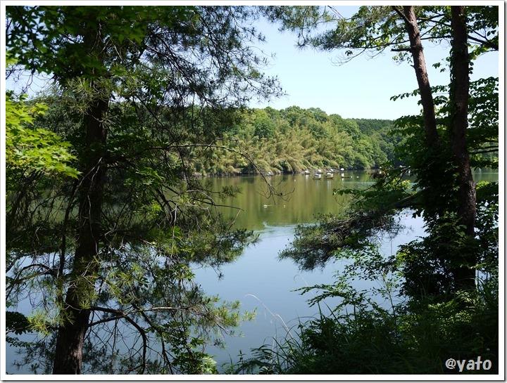 飯能桜の森から宮沢湖